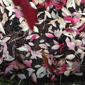 Pink Leaves Falling