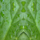 Water leaves macro large scale