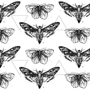 Geometric Moths