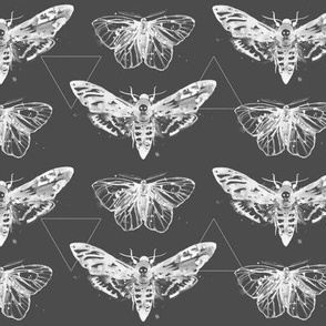 Geometric Moths - inverted