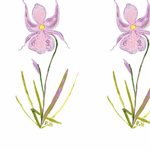 Orchid_2-ed-ch