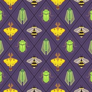 Insecta Geometrica