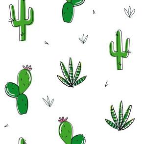 Cactus desert plants hot summer