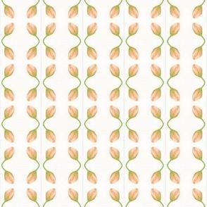 Apricot Cross Bud