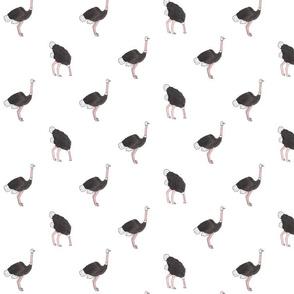 Ostrich Fabric