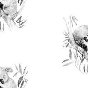 Sleepy Koala on White, Further Apart