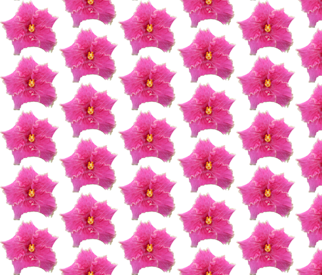 PinkHibiscus fabric by creativespaces on Spoonflower - custom fabric