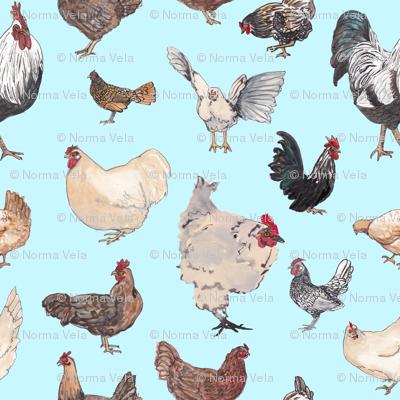 Chicken Happy - Tiny Blue