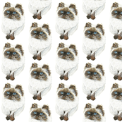 Himalayan Cat Pattern