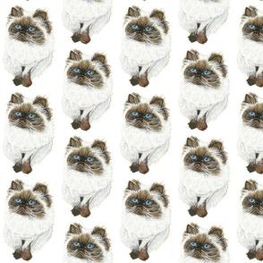 Himalayan Cat Pattern