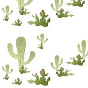 Hand drawn Cactus  southwest