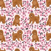 Rruby_cavoodle_cherry_blossom_shop_thumb