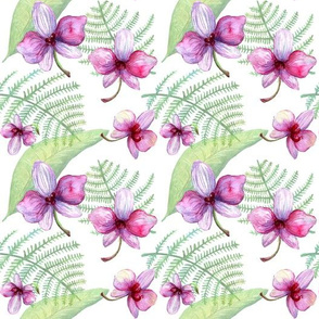 Orchids_and_fern