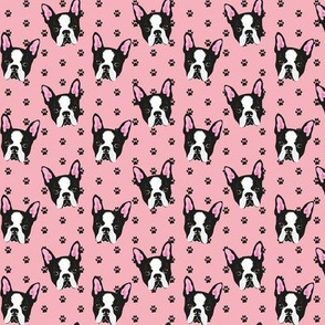 BOSTON-TERRIER-PATTERN-ROSA