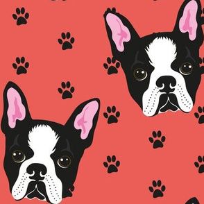 BOSTON-TERRIER-PATTERN-ROSSO