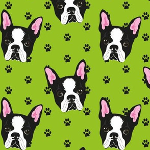 BOSTON-TERRIER-PATTERN-VERDE