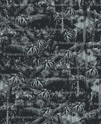 Graphic Jungle