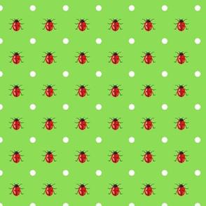 LadyBug on Green Background with White Dots