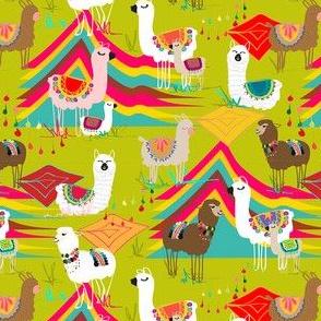 Peruvian_alpaca