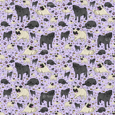Pugs on Purple