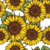 Rsunflower_shop_thumb