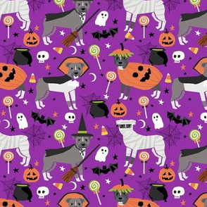 Pitbull halloween costume dog fabric vampire ghost mummy  purple