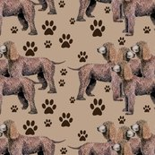 987431_rrirish_water_spaniel__with_pawprints_shop_thumb