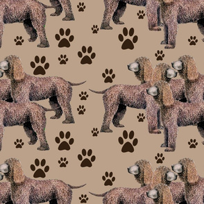 987431_rrIrish_Water_Spaniel__with_pawprints