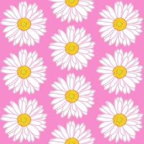 white gerber daisy on pink