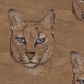 Maple African Golden Cat