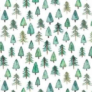 Evergreen Christmas Trees or Forest