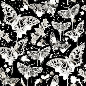 Haunted Splatter Moths