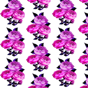 Redoute Rose in Magenta Pink
