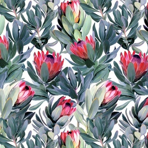 Painted Protea Pattern on White Background