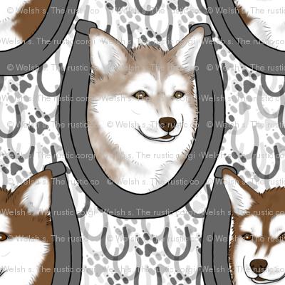 Alaskan Klee Kai horseshoe portraits