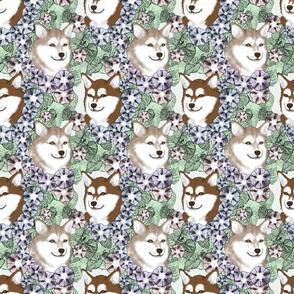 Floral Alaskan Klee Kai portraits
