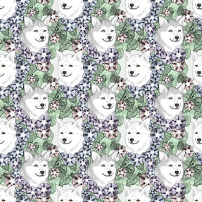 Floral Alaskan Klee Kai portraits C