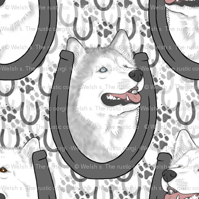 Siberian Husky horseshoe portraits C
