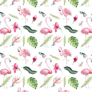 Tropical flamingo  3