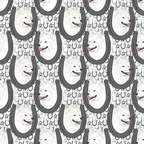 American Eskimo Dog horseshoe portraits