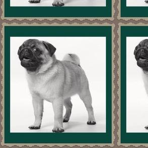 Pippa the Pug