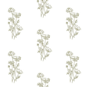 Queen Anne's Lace Olive On White