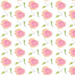 Rosa_bella_2
