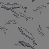 Sea Guardians