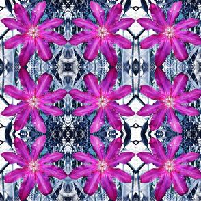 clematis mirror pink