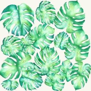Monstera Hawaiian Leaves