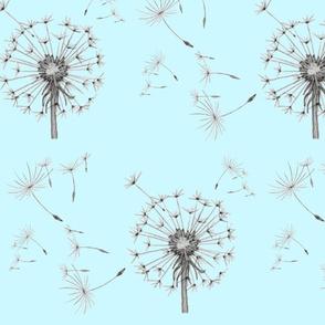 Make a wish (shade 2)