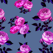 Pink Rose / redoute roses