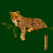 Rrrrcustom_jaguar_for_pillows_shop_thumb
