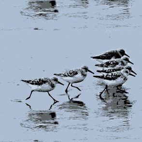 Six Beach Birds Gray